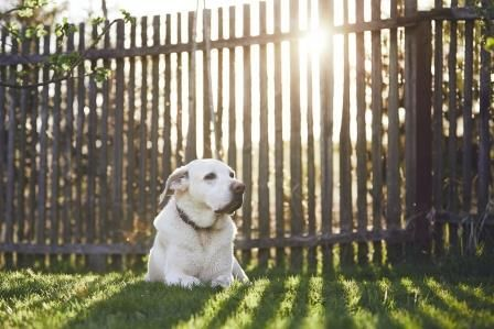 dog sitting in front of a fence